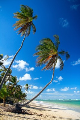 Photo of Caribbean beach with palms